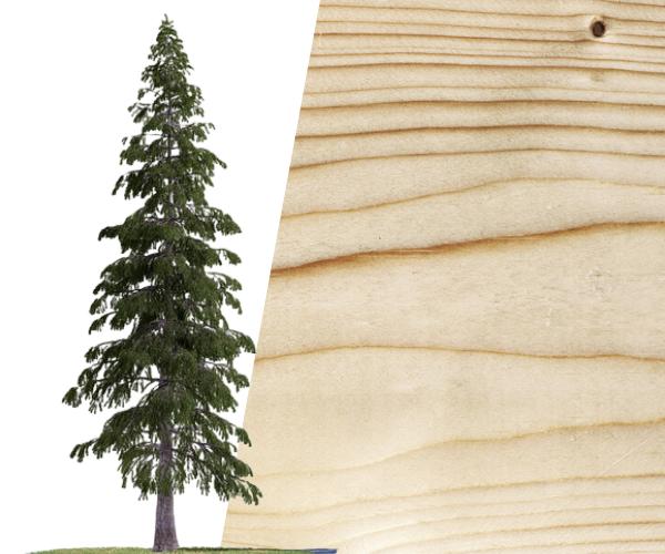 fir wood texture