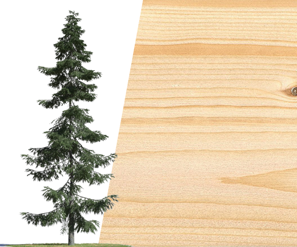 timber trade line Red Spruce